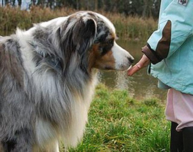 Comportement d'un enfant avec un chien